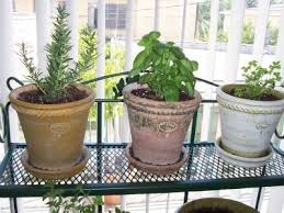 Indoor Herb Garden  How To Have An Herb Garden Inside