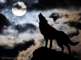 волчица воет на луну картинки