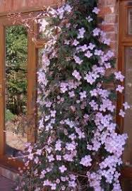 Make An Invisible Trellis For A Climbing Plant  YouTubeWall Climbing Plants In Pots