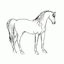 25 Vinden Paarden Printen Kleurplaat Mandala Kleurplaat Voor Kinderen