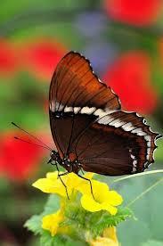 Wonderful Butterfly