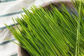 Wheatgrass Nutrition Chart How Much Protein Does Wheatgrass Have Healthy Eating Sf