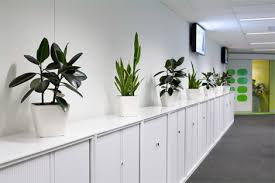 office indoor plants. Not Talking About Setting Up A Gym At Your Office, But What We Have Is Economical Way And The Health Benefits Are Manifold. It Indoor Plants. Office Plants O