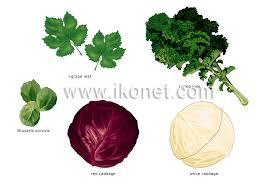 Food And Kitchen Food Vegetables Leaf Vegetables Image