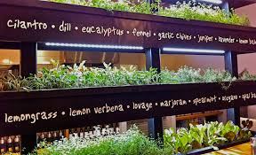 indoor herb rack at lyfe kitchen in palo alto calif nice lesson in herb plant identification photo originally found on liveloveyoga wordpress com