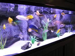 fish tank lighting ideas. Impressive Fish Tank Idea Best Ideas For You Lighting