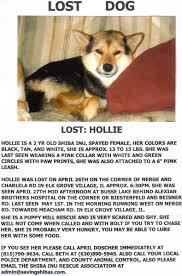 Lost Pet Flyer Maker LOST FOUND FLYER Latest Information 40