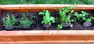 herb garden in planter boxes patio herb garden wooden planter box plans best containers for growing