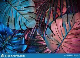 2,284 Neon Jungle Photos - Free ...