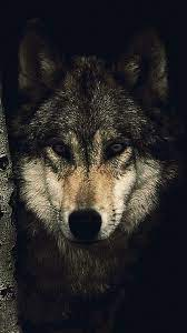 Dark Lone Wolf Wallpaper Hd - wallpaper