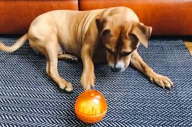 the best dog toys according to our pups reviews by wirecutter a new york times company