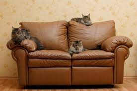 leather couch bleached by cat urine