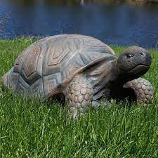 tanya the tortoise indoor outdoor lawn