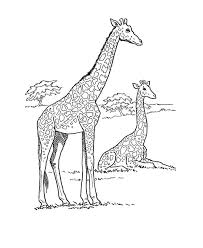 Small Picture 141 best Giraffes images on Pinterest Adult coloring Giraffes