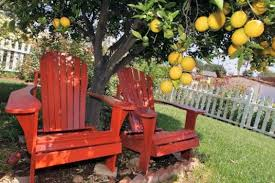 Tips For Growing Citrus In Southern California Orange