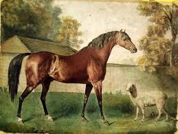 vintage painting print on canvas ready to hang equine horse sheep stubbs