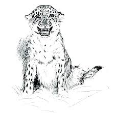 Leopard Coloring Pages Free L Is For Snow Sheets Enigmatikco
