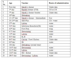 Chicks Vaccination Chart Layer Management