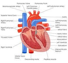 symptomen hartruis