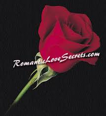 Beautiful Quotes Rose Flower Best of Rose Quotes