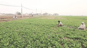 Aims serves as the bond for insurance brokers who have farms, ranches, wineries, vineyards and commercial growers of agricultural products. Pune Institute Works On Model To Improve Crop Insurance Cities News The Indian Express