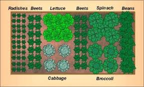 small herb garden design guyf
