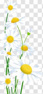 transpa common daisy clip