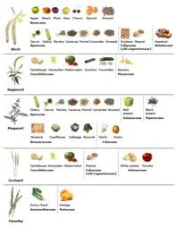 Oral Allergy Syndrome Foods List Complete With All Pollen