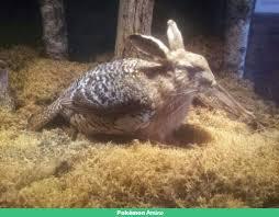 Bird hare mix thingy...   Pokémon Amino