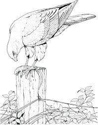 Free Bird Coloring Pages At Getdrawingscom Free For Personal Use