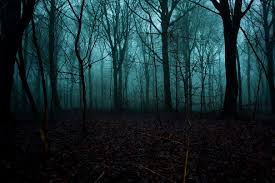 scary forest - Google Search