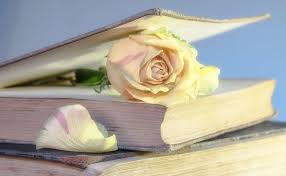 Книга и роза — Book and rose