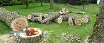 3 Critical Questions to Ask a Tree Removal Company | Patriot Lawn and  Landscape Blog