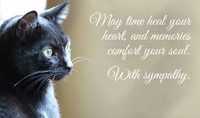Loss Of A Cat Quotes Stunning Condolence Messages For Loss Of Pets Dog Cat And Other Pets
