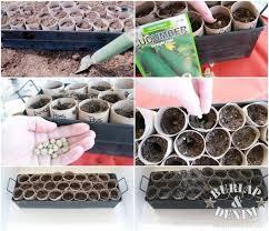 How To Germinate Flower Seeds Paper Towel Toilet Paper Roll Seed Startersburlap Denim
