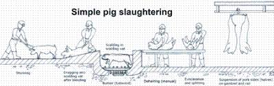 Design and equipment recommendations for small  to medium sized       Small scale pig slaughtering on a two tiered floor