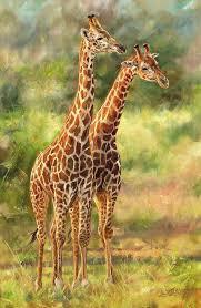 giraffes painting giraffes by david stribbling