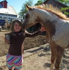 Myra Crawford Show Horses - Home | Facebook