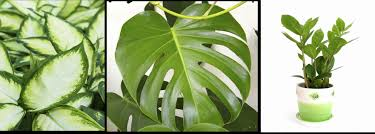 office adas features lime. Office Adas Features Lime. Plants For Windowless Office. Left Plant T Lime A