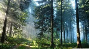 10 Latest Hd Forest Wallpapers 1080P ...