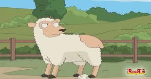 Risultati immagini per pecora e lupo
