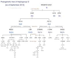 Phylogenetic Tree Of Haplogroup I2 Y Dna Eupedia