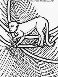Jungle Coloring Book Rainforest Printable Coloring