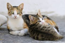 for mother s day 25 pictures of mama cats and their kittens