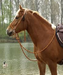 Barefoot | 'Amber' <b>Bridle 2</b>-in-1 | purchase online | Pretty <b>horses</b> ...