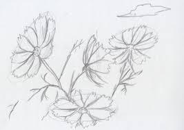 コスモスを描いてみよう秋の風物詩の簡単な描き方 イラストの描き方