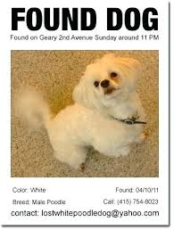 Found Dog Poster Template For Missing Pet Free Templates Flyers Lost