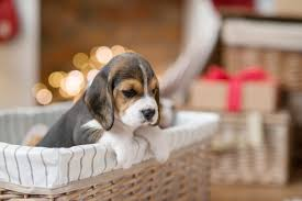 <b>Christmas Dog</b> Images | Free Vectors, Stock Photos & PSD
