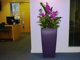 office plant displays. Floral Decor Office Plant Displays Grimsby 4