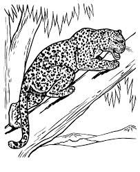Small Picture Baby Leopards Coloring Pages Coloring Coloring Pages